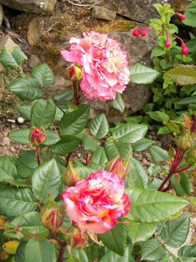 jardin mai 004